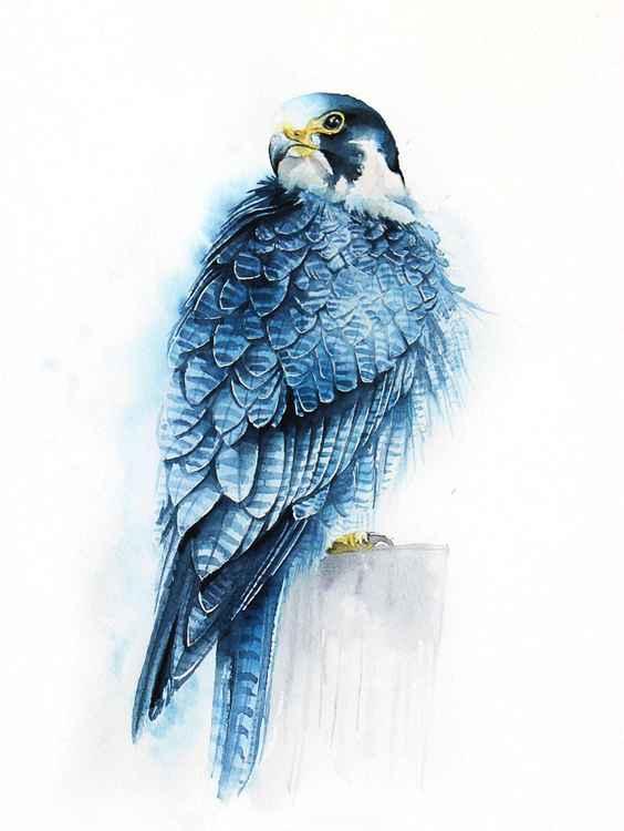 Blue falcon,  bird, birds, animals, wildlife watercolour painting