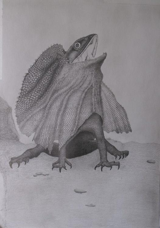 Beautiful Frill-necked Lizard - Image 0