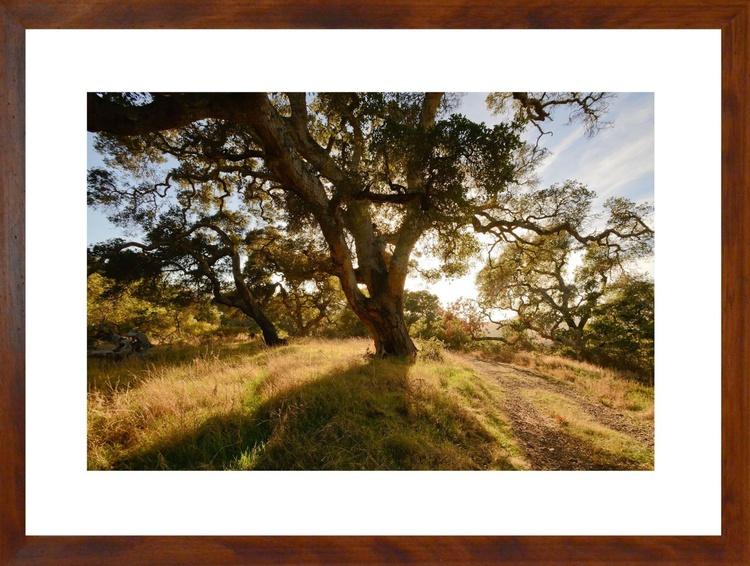Tree of Big Sur - Image 0