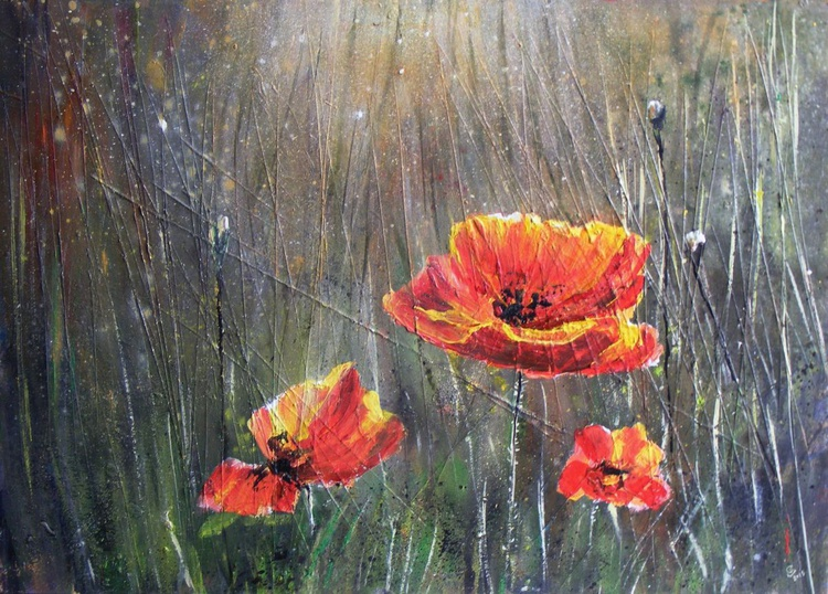 """""""Wild Poppies"""" - Image 0"""