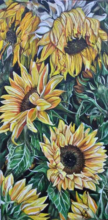 Sunflowers  -