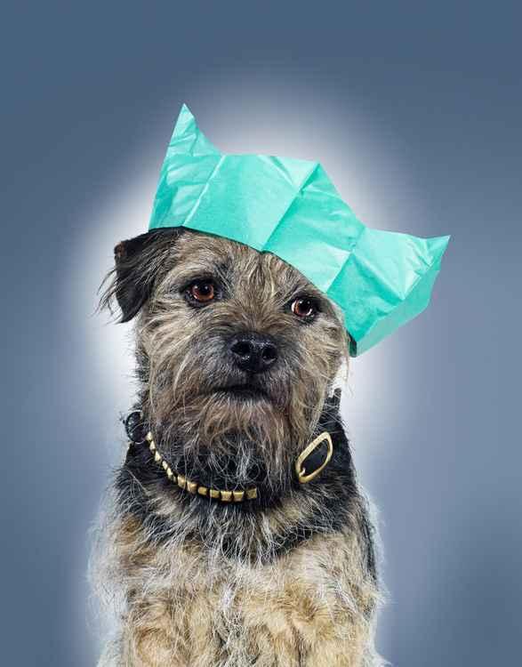 Doggy Christmas -