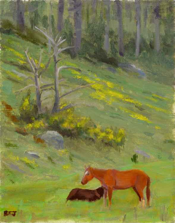 Rodeo Horses -