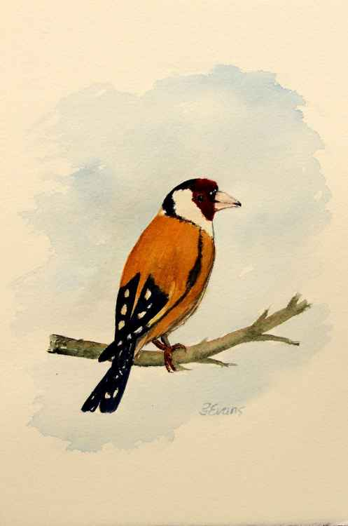 Goldfinch -