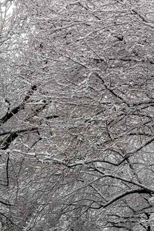 Snow and Branches -