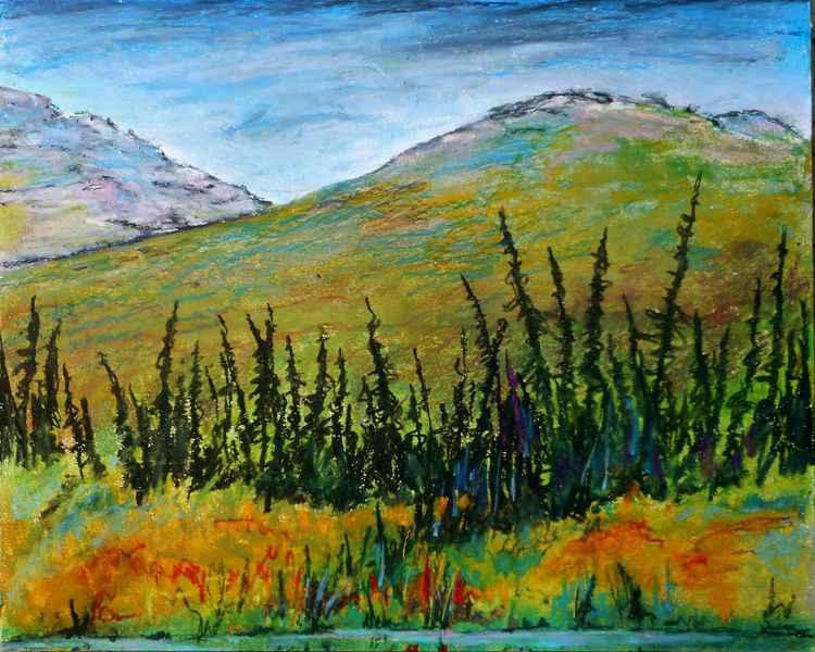 Northern Spruce -