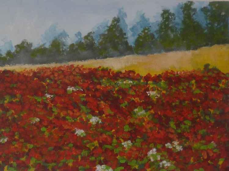 Poppy Field France