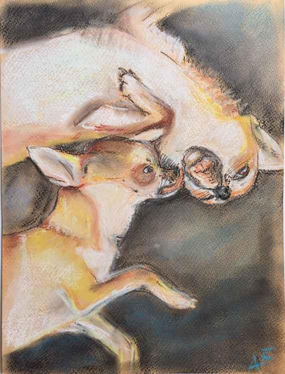 Chihuahuas playing