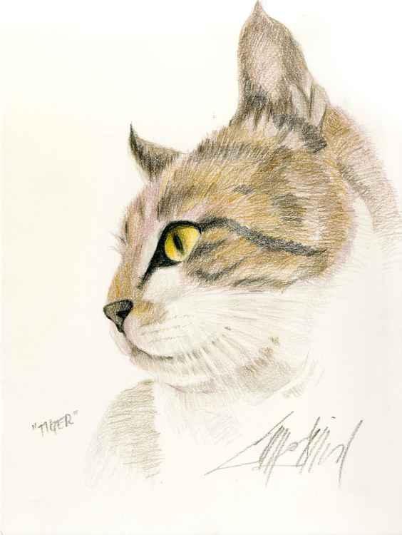 Tiger Kitty -