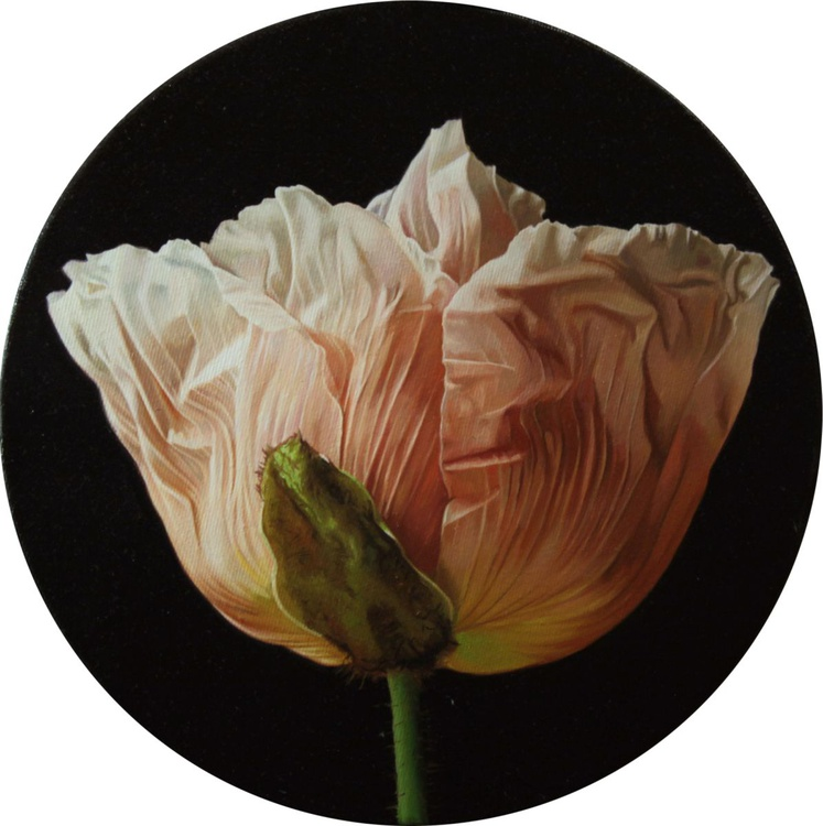 poppy in a circle - Image 0