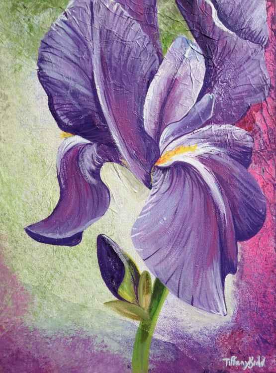 Textured lilac Iris