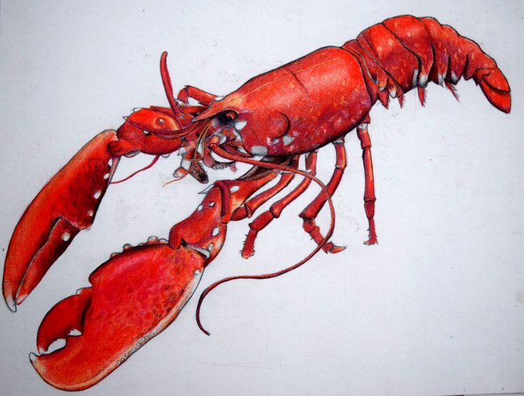 Native Lobster II - Image 0