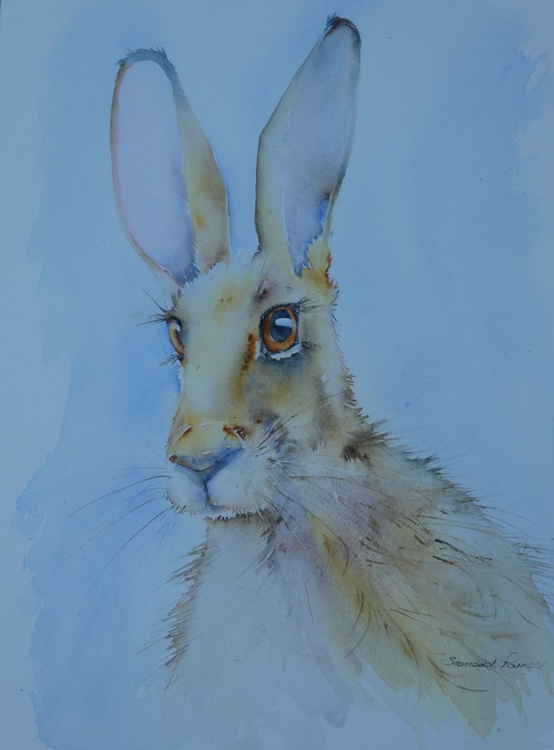 Breezy Hare - Image 0