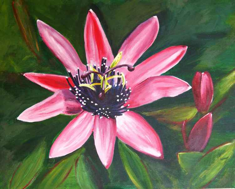 Passion Flower -