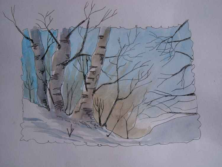 Birch in Winter -