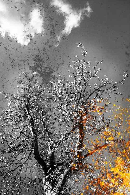 Golden Spring -