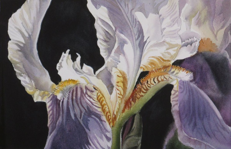 "A painting a day #3 ""Iris with black"" - Image 0"
