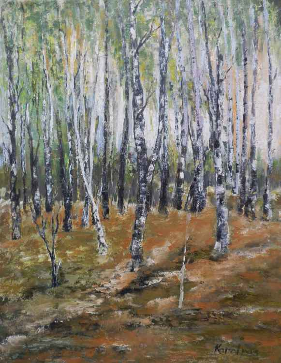 Birches forest -