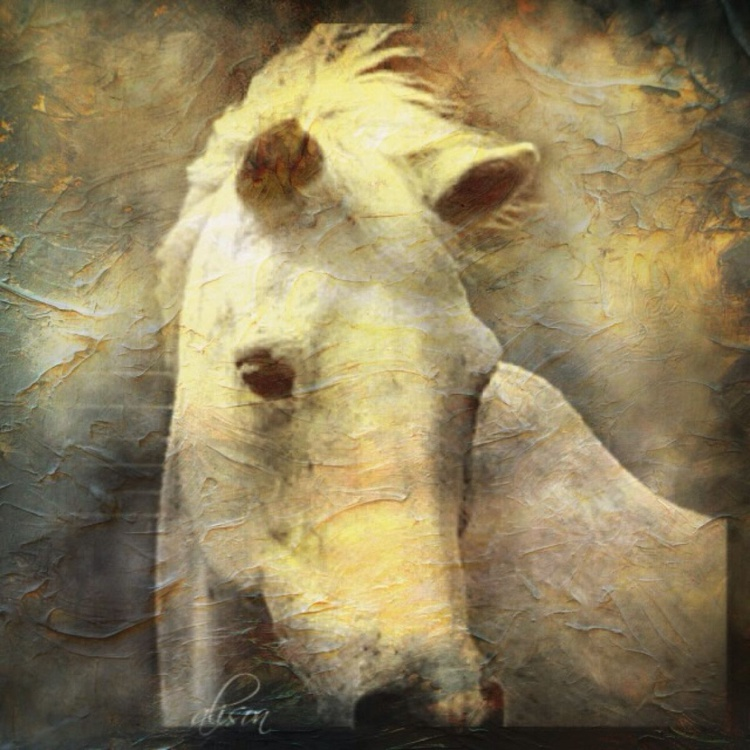 A Horse Named Steel - Image 0