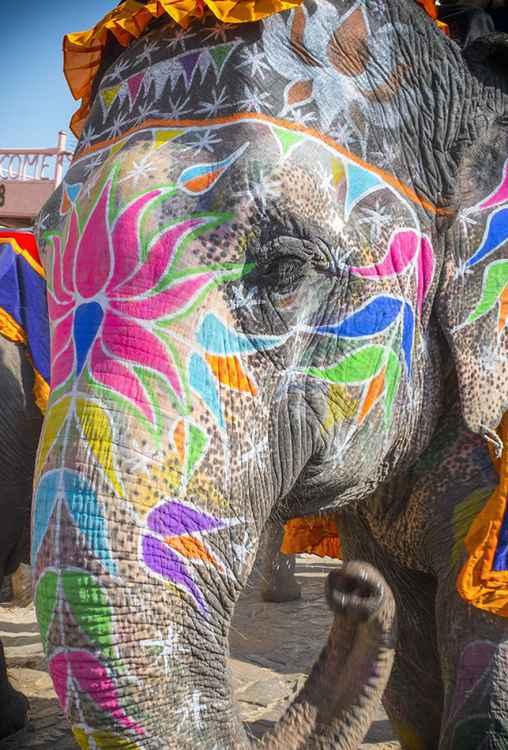 Jaipur Elephant -