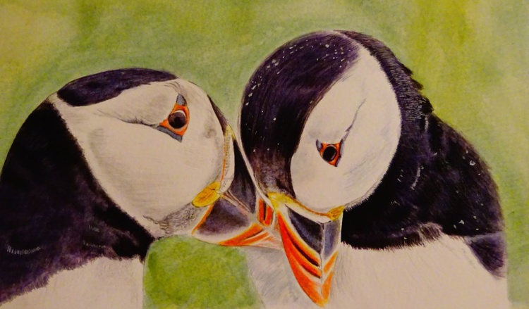 Puffin love - Image 0