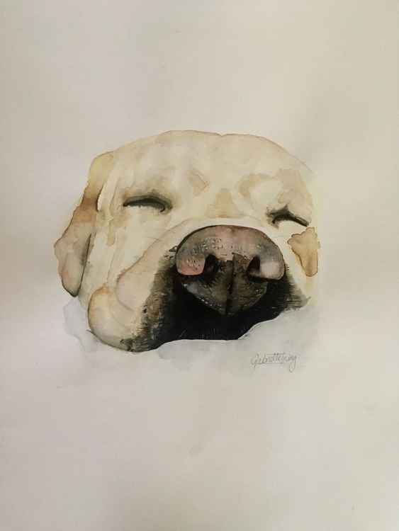 Sleeping dog -