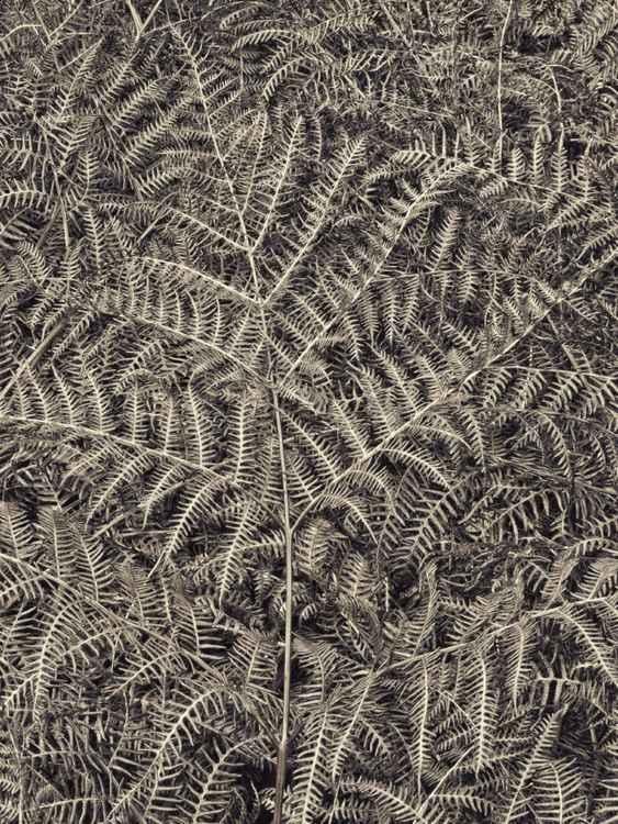 Texturize #2 (fern) -