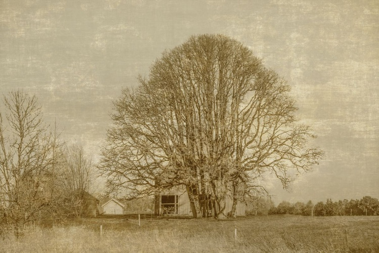 Rustic House - Image 0