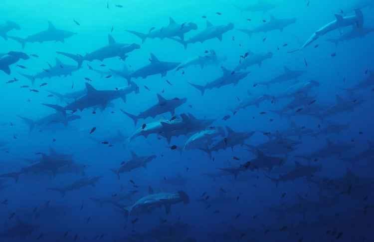 Galapagos Deep -