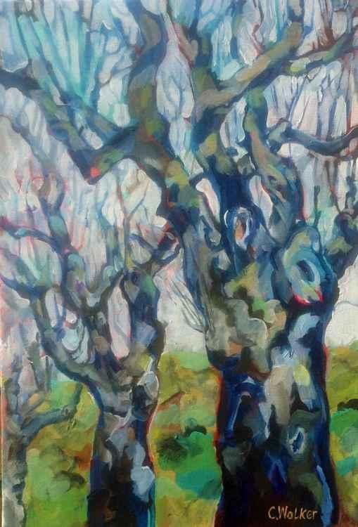 Platane (Plane Tree) -