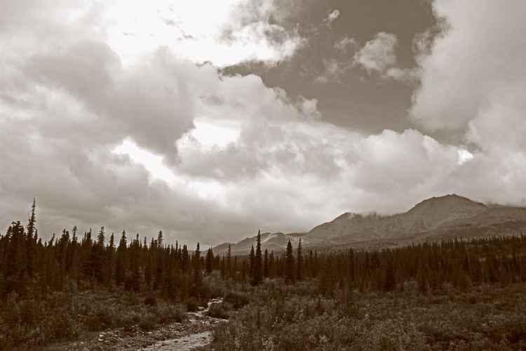 Denali National Park Serenity