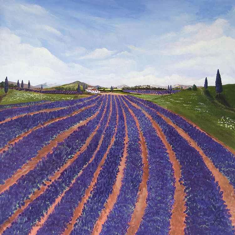 Provence Lavender -