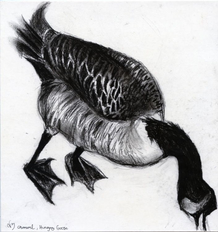 The hungry charcoal goose - Image 0