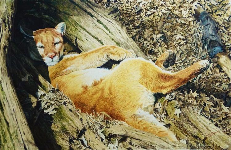 Puma's Siesta - Image 0