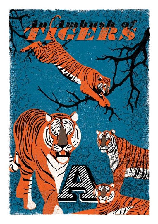A - an ambush of Tigers