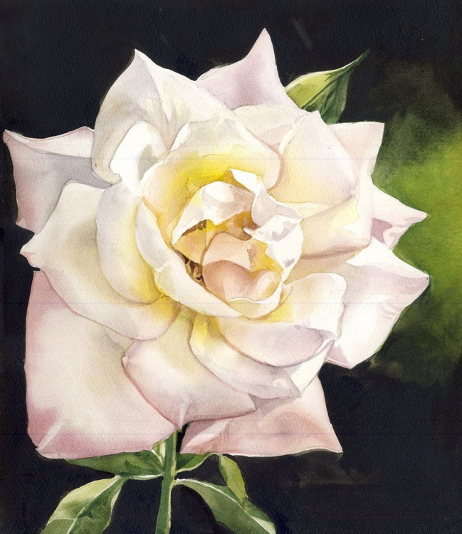 English Rose - Image 0