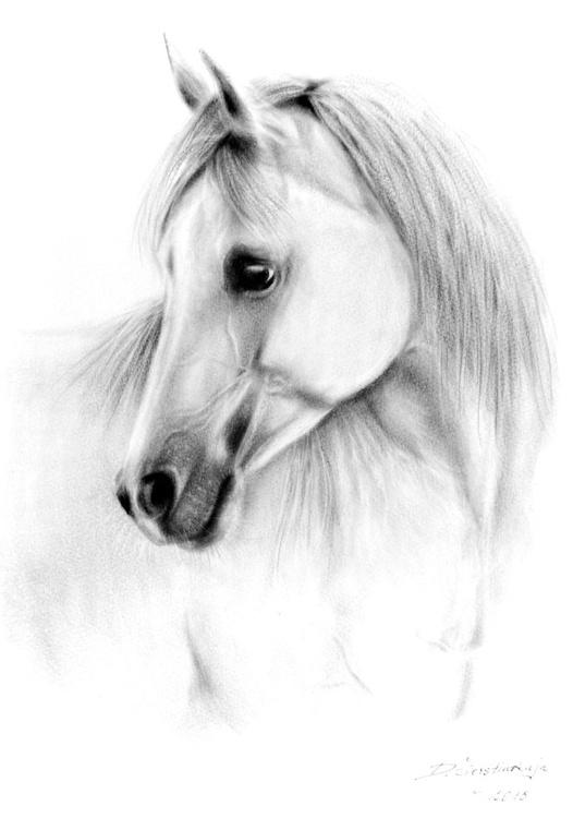 Arabian Beauty - Image 0