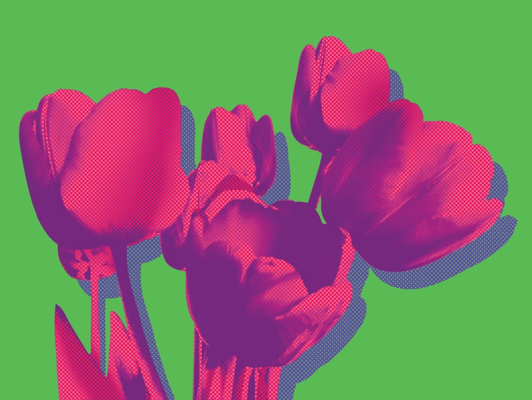 Tulips on green - Image 0