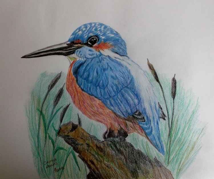 Kingfisher. -