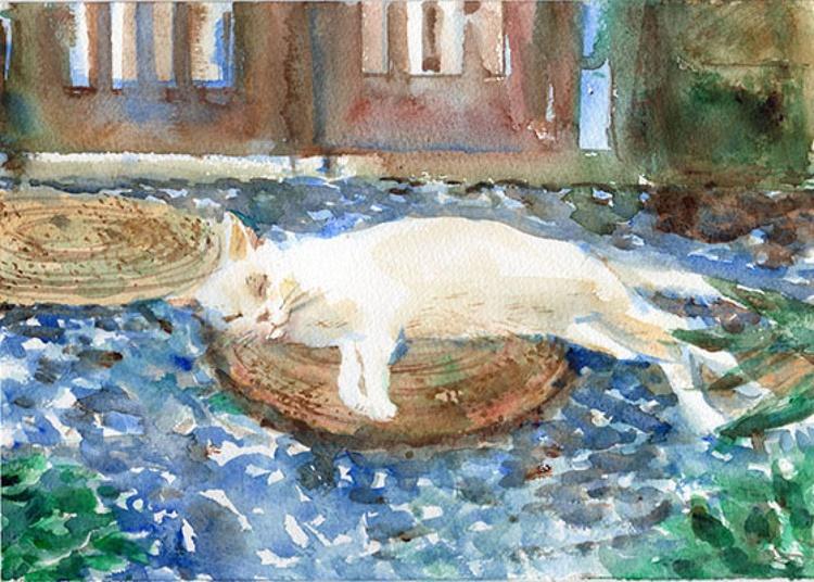 White cat having a nap - Image 0