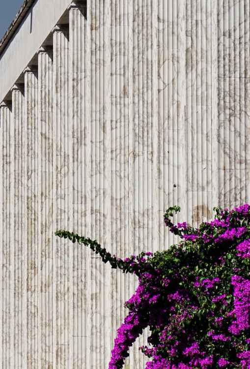 Vegetal Implications 3 - Odd Neighbours -