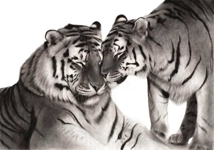 Tigers - Image 0