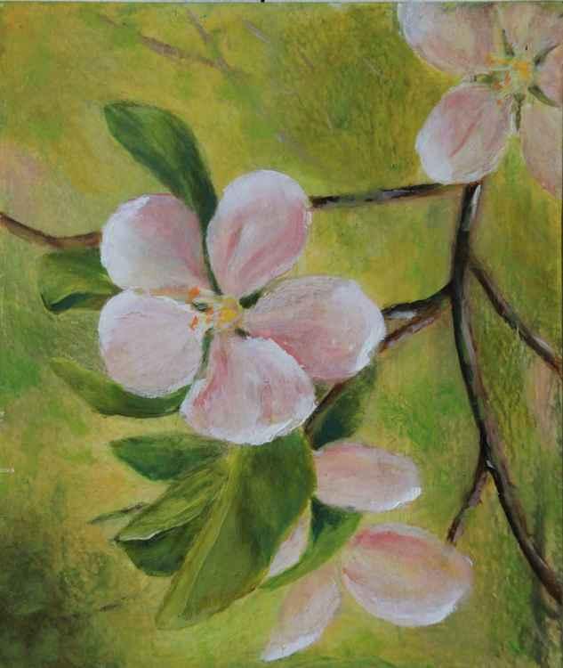 Flowers in spring -