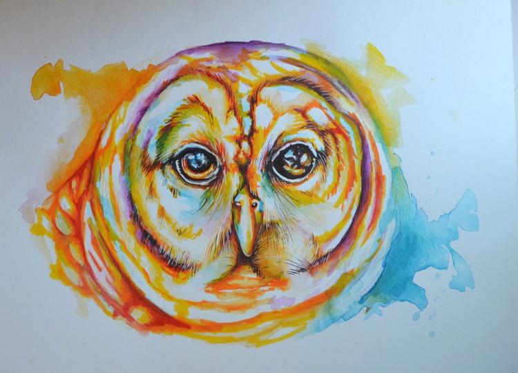 Barred Owl - Image 0