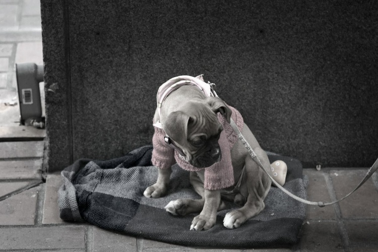 Dog Portrait #2 - Image 0