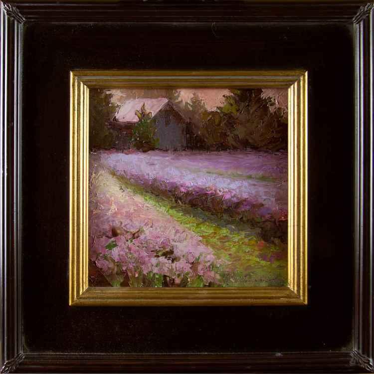 Upper Field Sunset - Lavender Barn Landscape -