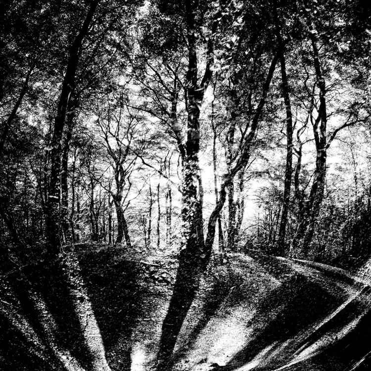 deep forest -