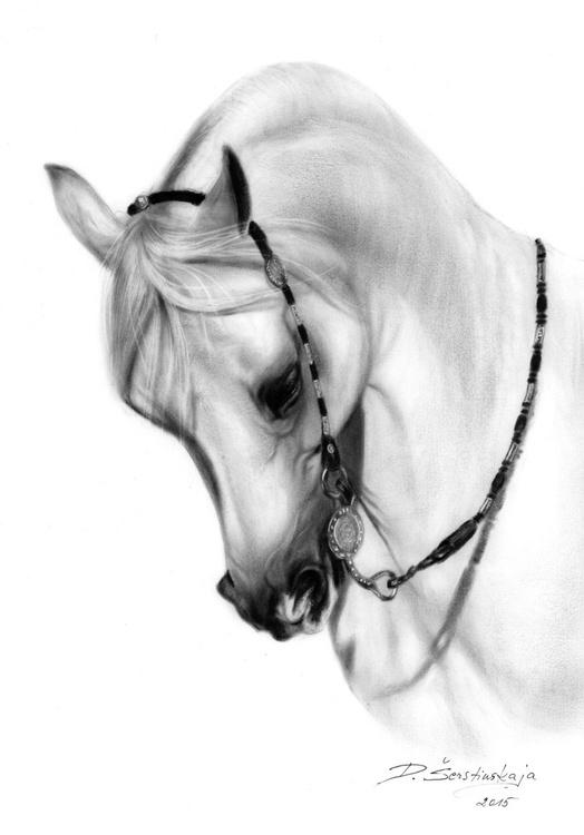 Arabian Horse - Image 0