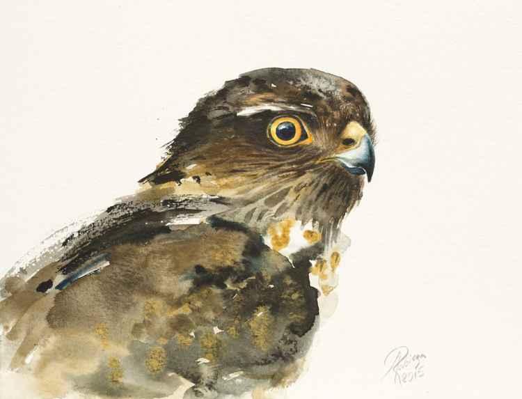 Common Kestrel (Falco tinnunculus) -
