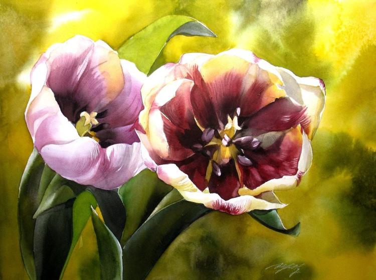 tulips in spring - Image 0
